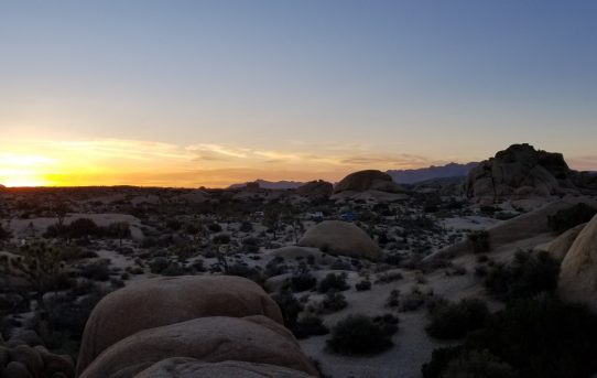 Went to Joshua Tree